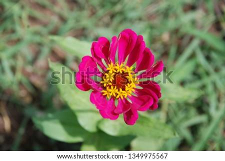 flowers  garden floral #1349975567