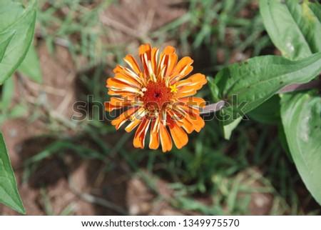 flowers  garden floral #1349975570