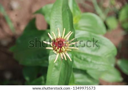 flowers  garden floral #1349975573