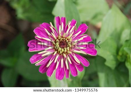 flowers  garden floral #1349975576