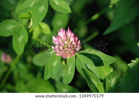 flowers  garden floral #1349975579