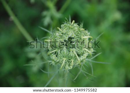 flowers  garden floral #1349975582