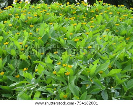 Flowers garden flowers flowers  isolated  #754182001