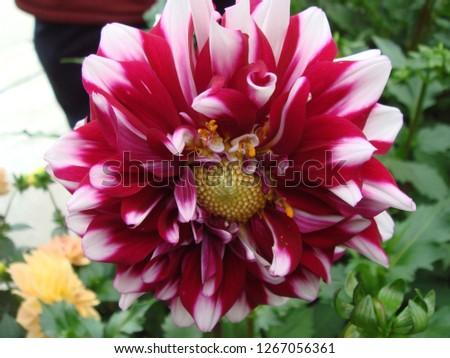 Flowers, gardens, flower pots, potted plants #1267056361