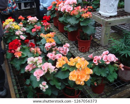 Flowers, gardens, flower pots, potted plants #1267056373