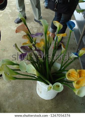 Flowers, gardens, flower pots, potted plants #1267056376
