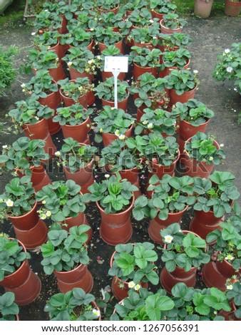 Flowers, gardens, flower pots, potted plants #1267056391