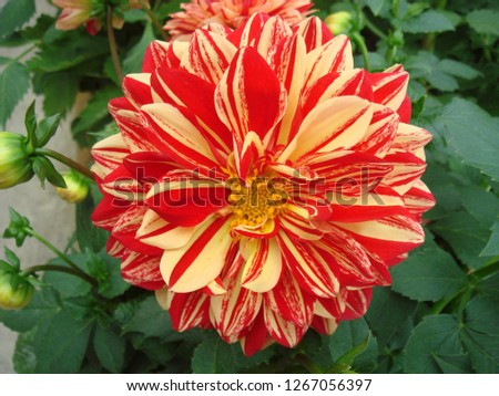 Flowers, gardens, flower pots, potted plants #1267056397