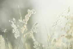 Flowers grass blurred bokeh background vintage.