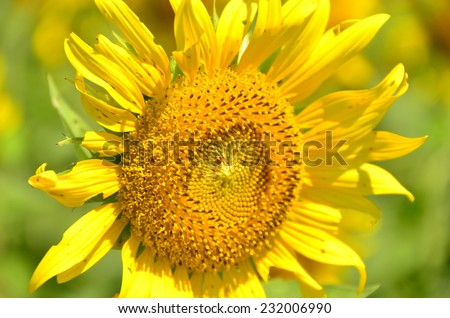 flowers green yellow background wallpaper beauty sunflowers