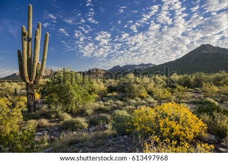 Flowers growing in the morning light in the Sonoran desert