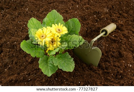 Flowers growing in the soil and hoe