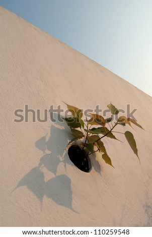 Flowers growing on a wall #110259548