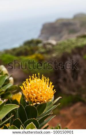Flowers growing on the rocks near the ocean