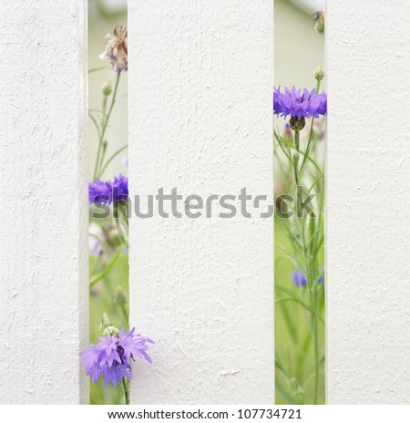 Flowers growing through fence, close-up