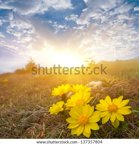 flowers in a rays of morning sun