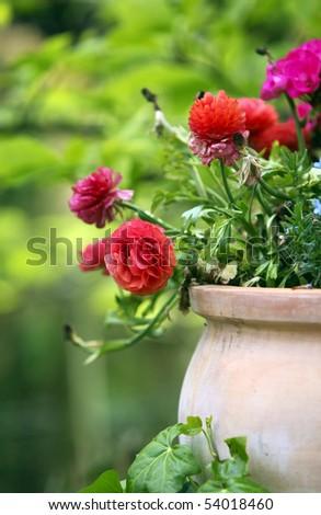 flowers in a terracotta flowerpot