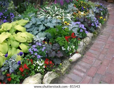 flowers in a wild flower garden up in Door County