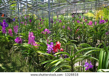 Flowers in an orchid nursery, thailand