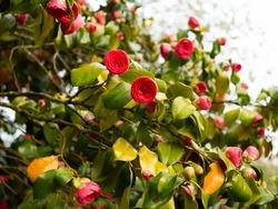Flowers in blossom at Botanic Gardens, Belfast