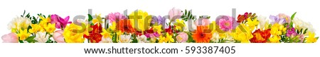 Flowers in cheerful colors, studio isolated on white, in banner format or as a seasonal natural border for spring and summer #593387405