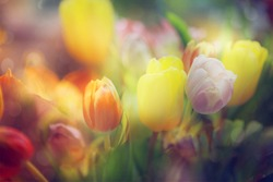 flowers in color filters. floral abstract backgrounds