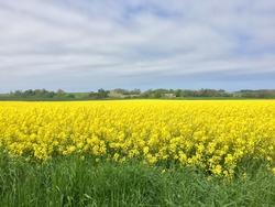 Flowers in Denmark