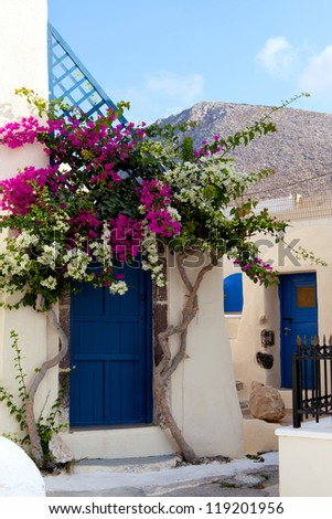 Flowers in entrance to the house, Greece, Santorini