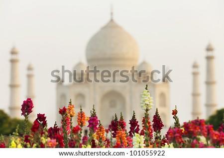 Flowers in front of  Taj Mahal, Agra, Uttar Pradesh, India