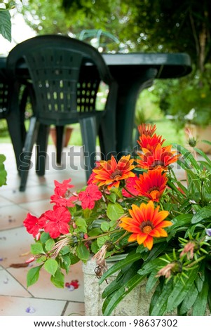 flowers in garden - stock photo