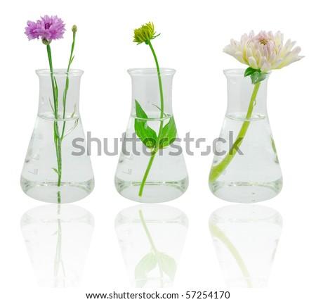 Flowers in glass flasks #57254170