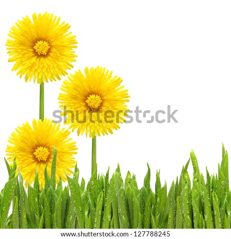 Flowers in grass isolated on white background.