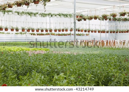 Flowers in greenhouse #43214749