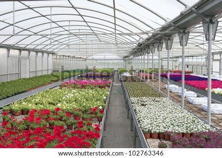 Flowers in greenhouse in spring