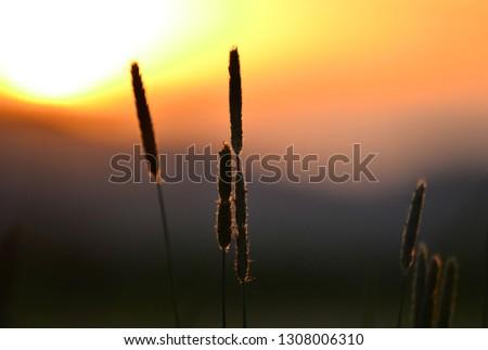 Flowers in nature Stock fotó ©