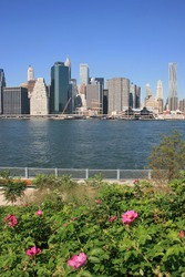 Flowers in New York's Brooklyn Bridge Park.  Lower Manhattan and East River in the background.