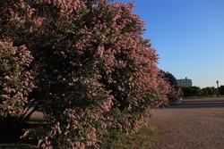 Flowers in park in SPB