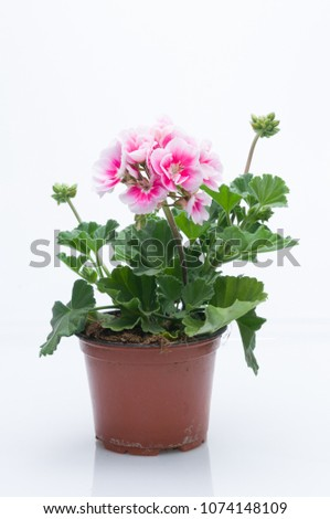 flowers in plastic pots over white #1074148109