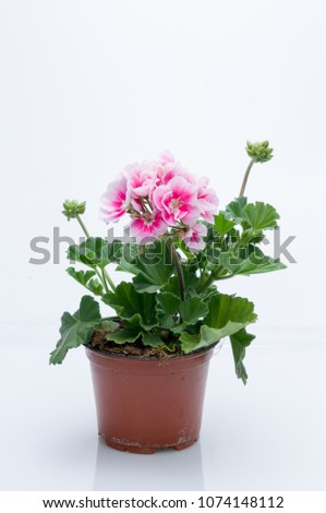 flowers in plastic pots over white #1074148112