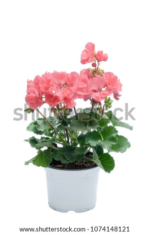 flowers in plastic pots over white #1074148121