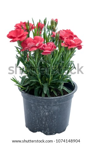 flowers in plastic pots over white background #1074148904