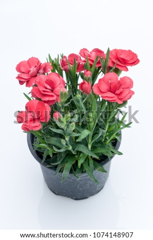flowers in plastic pots over white background #1074148907