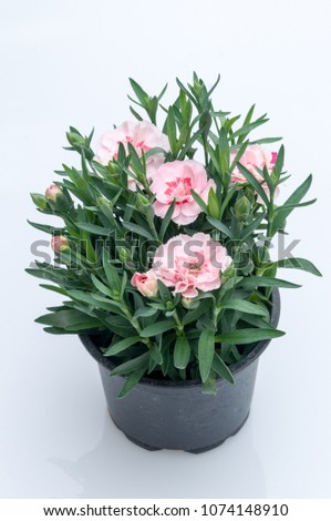 flowers in plastic pots over white background #1074148910