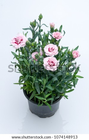 flowers in plastic pots over white background #1074148913