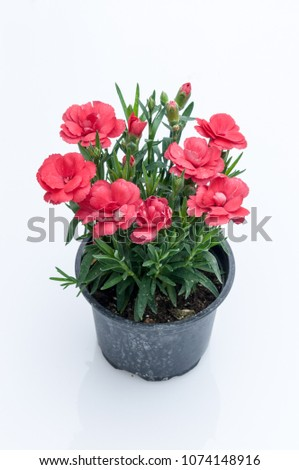 flowers in plastic pots over white background #1074148916