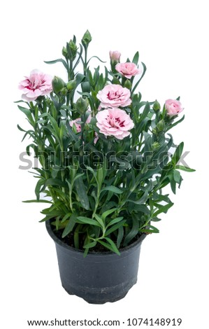 flowers in plastic pots over white background #1074148919