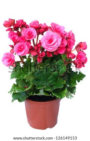 Flowers in pots. #126149153