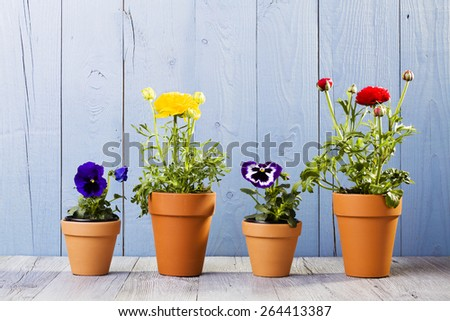 Flowers in pots ready for transplanting