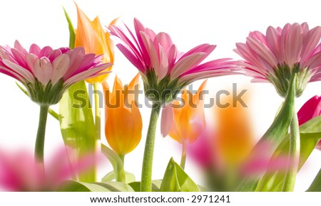 flowers background white. with white background