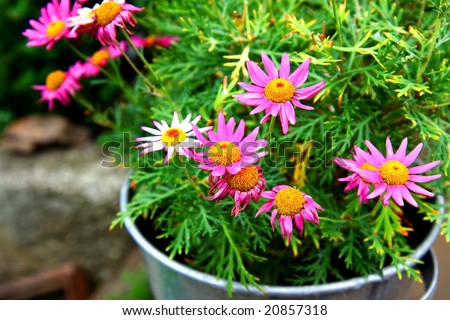 flowers in steel pot